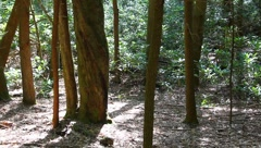 Senic view of the woods Stock Footage