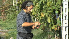 Italy Piedmont man tests grapes 34 Stock Footage