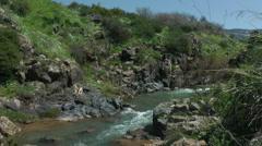 Saar River and Saar Waterfall. Bloom, flowers, sunny day. Stock Footage