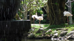 Flamingos Absorb the Sunshine Stock Footage