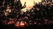 Sunset through the trees (v.2) Stock Footage