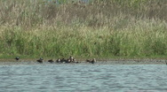 Stock Video Footage of Wild Migrating Birds in Agmon Ahula