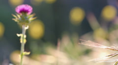 Contrasting Wildflowers - stock footage