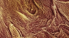 Skin surface, SEM Stock Footage