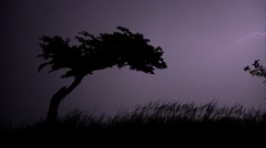 HD Massive Electrical Storm Lightning Bolt Montage with Silhouetted Tree Stock Footage