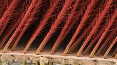 Tarantula hair, SEM Stock Footage
