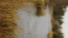 Dreamy River Vertical 69 29.97p Stock Footage