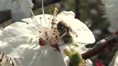 Insect eats flower Stock Footage