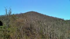 Acid rain trees on mountain 03 Stock Footage