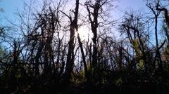 Sun shines through acid rain trees on mountain Stock Footage