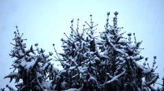 Winter scene with snow falling Stock Footage