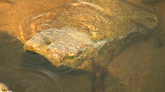 The stone at the bottom of the river Stock Footage