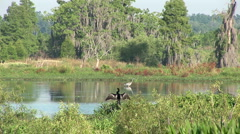 Heron and darter Stock Footage