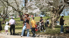 Taking pictures of blossoms. Stock Footage
