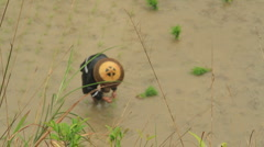 Planting Rice on the Dragon's Backbone Rice Terraces 1 Stock Footage