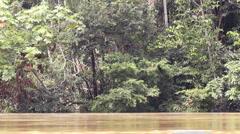 Rio Tiputini in the Ecuadorian Amazon Stock Footage