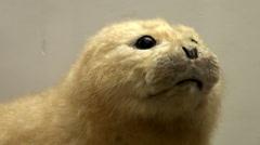 A stuffed animal Stock Footage