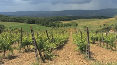 Tuscany vineyard with bare ground - stock footage