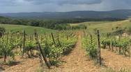 Stock Video Footage of Tuscany vineyard with bare ground