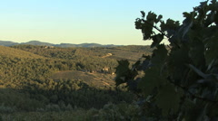 Zooms past vines to view in Italy's Chianti region Stock Footage