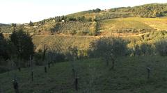 Chianti zooms on grape harvest Stock Footage