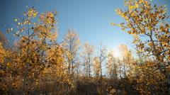 Central Idaho Autumn 40A 29.97 Stock Footage