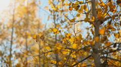 Central Idaho Autumn 43 29.97 Stock Footage