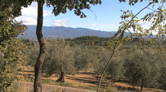 Chianti view of olive trees and mountains Stock Footage