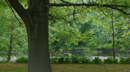 Tree and Leaves in the breeze Stock Footage