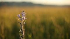 Camas Marsh Background 29.97 Stock Footage