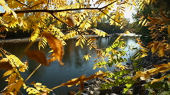 Fall River Leaves 4 29.97 Stock Footage
