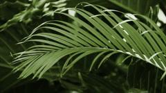 Green Palm Waving Loop Stock Footage