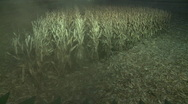 Stock Video Footage of Corn harvesting at night