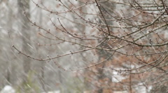 Snow Falling on Tree Branches 3 - stock footage