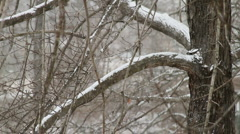 Snow Falling on Tree - stock footage