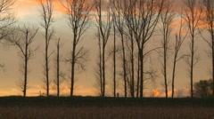 Runner silouhette against a autumn sunset Stock Footage