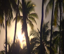 Molokai, Hawaii WS with tall cocount trees and sun shinning through Stock Footage