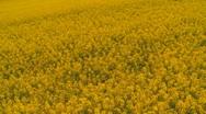 Oilseed rape Stock Footage