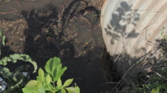 Water Snake in pond - Iowa # 4 Stock Footage