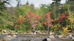 Fall foliage along the Swift River, New Hampshire Stock Footage