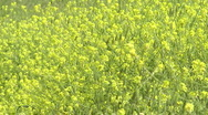 Grass meadow, nature park, dirt road, forest. Slow motion. Stock Footage