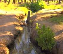 Molokai stream with coconuts and branches, tilt down to small circular pon Stock Footage