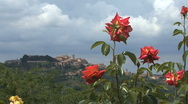 Stock Video Footage of Tuscany Montepulciano with red roses