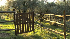 Italy gate to Tuscan olive grove Stock Footage
