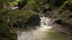 Jungle Stream Stock Footage