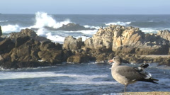 Birds and seagulls along the oceanic drive Stock Footage