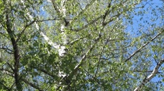 Spring trees Stock Footage