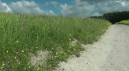Grass meadow, nature park, dirt road, forest. Stock Footage
