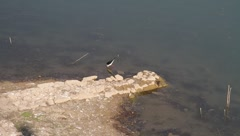 Indian river tern Stock Footage