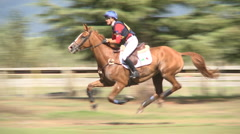 Horse galloping Stock Footage